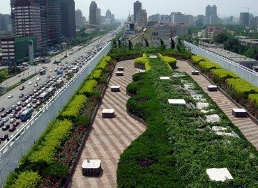 Зеленая крыша здания в Пекине