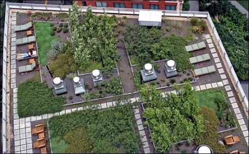 Зеленая крыша в Нью-Йорке
