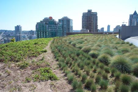 Зеленая крыша государственной библиотеки Ванкувера