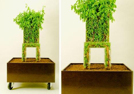 стул-дерево