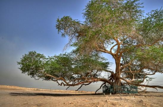 Дерево-жизни