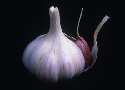 Чеснок - Allium-sativum
