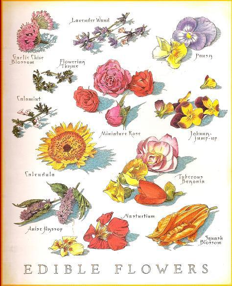 какие цветы можно есть