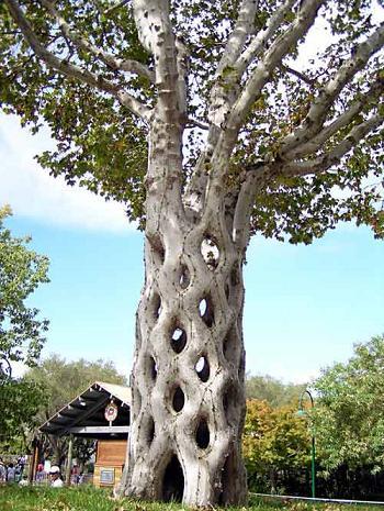 Дерево-корзина