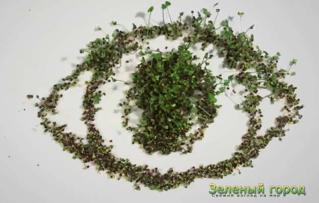 Зеленый мир из семян