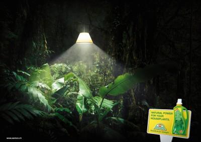 Зеленый мир. Лампа