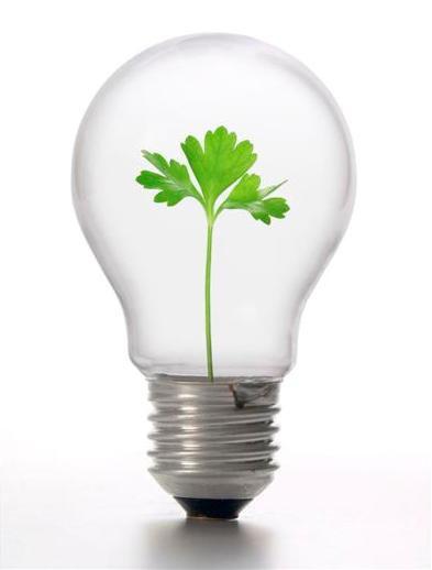 Лампочка с петрушкой