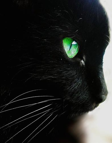 Черная кошка с зелеными глазами