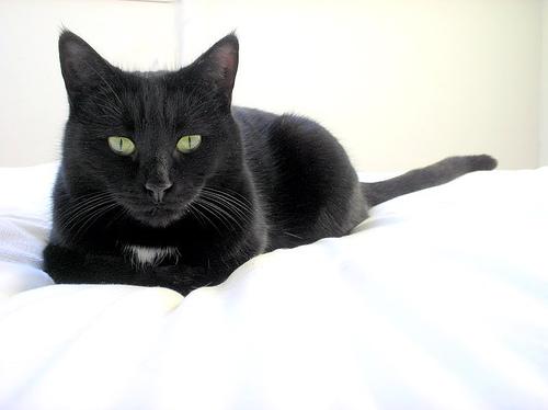 Черная кошка с зелеными глазами 1