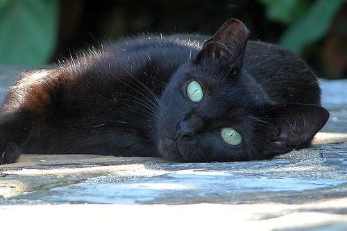 Черная кошка с зелеными глазами 3