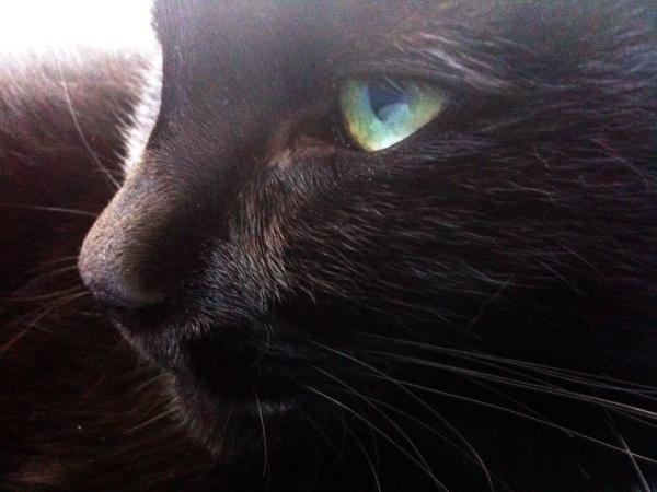 Черная кошка с зелеными глазами 4