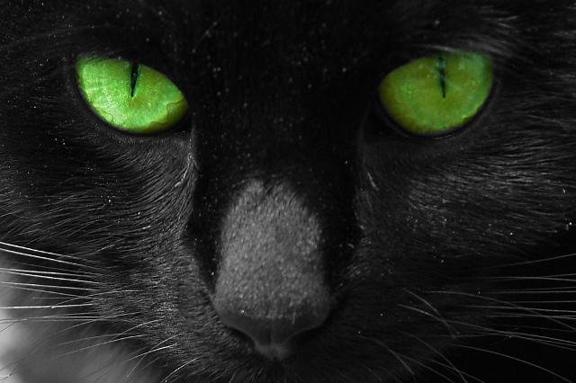 Черная кошка с зелеными глазами 5