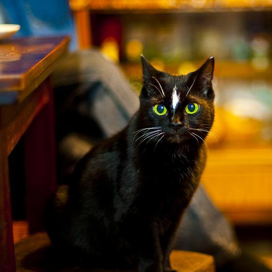 Черная кошка с зелеными глазами 7
