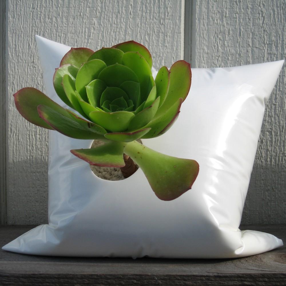 Комнатный цветок в пакете