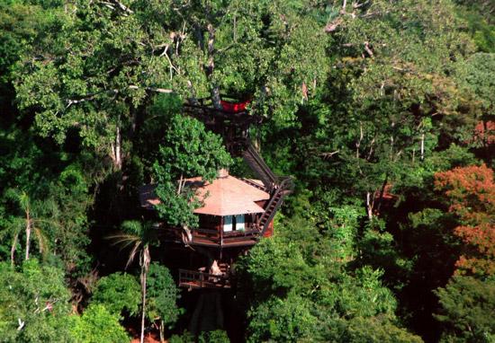 дом на дереве -1