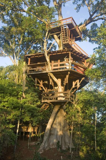 дом на дереве -2