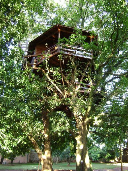 дом на дереве-7