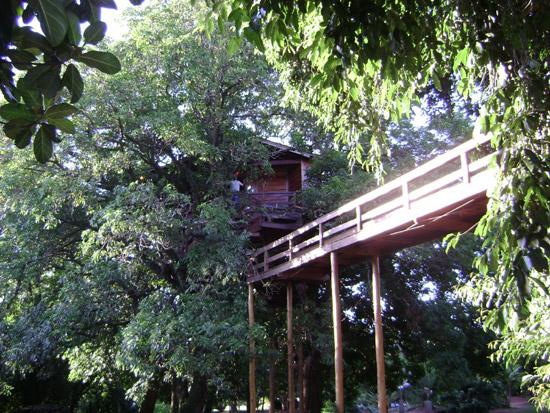 дом на дереве-8