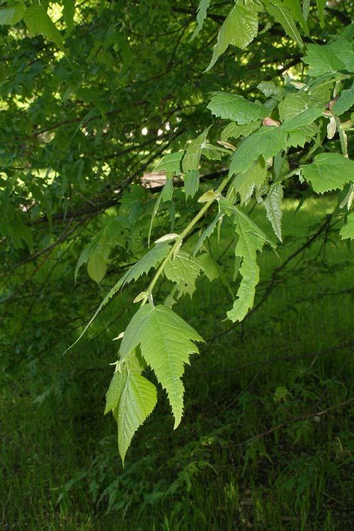 какие травы используют при аллергии